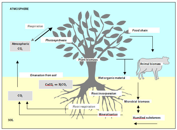 Carbon 14 and the environment for Soil life cycle